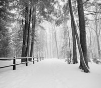 Winters Path Fine-Art Print