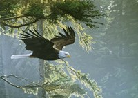 Forest Flight / Eagle Fine-Art Print