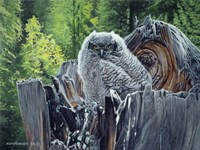 Great Horned Owl Fine-Art Print