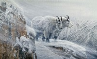 Winter's Fury Mountain Goat Fine-Art Print