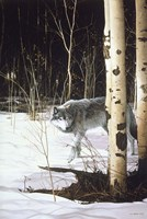 Grey Wolf & Aspen Fine-Art Print
