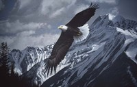 Wings Over Winter Fine-Art Print
