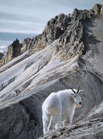 Ramparts- Mountain Goats Fine-Art Print