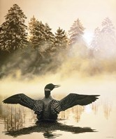 Misty Dawn - Loon Fine-Art Print