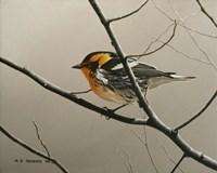Nashville Warbler Fine-Art Print