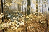 Autumn Maples - Wolves Fine-Art Print