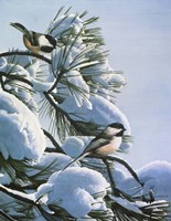 Snow On The Pine - Chickadees Fine-Art Print