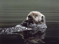 Just Resting - Sea Otter Fine-Art Print