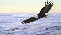 Ocean Dawn- Eagle Fine-Art Print
