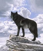 Black Wolf On Skyline Fine-Art Print
