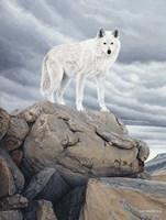 White Wolf Fine-Art Print