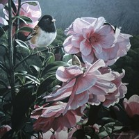 Junco And Camelia Fine-Art Print