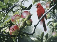 Cardinal And Apples Fine-Art Print