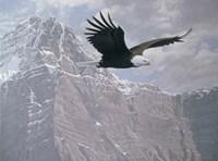 Mountain Flight Fine-Art Print