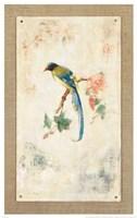 Blue Magpie Fine-Art Print