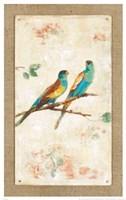 Hooded Parrot Fine-Art Print
