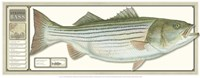 World Record Striped Bass Fine-Art Print