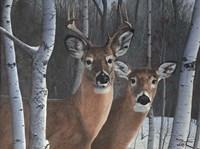 Deer Magic Fine-Art Print