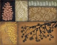 Pine Cones 2 Fine-Art Print