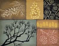 Pine Cones 3 Fine-Art Print