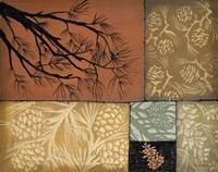 Pine Cones 4 Fine-Art Print