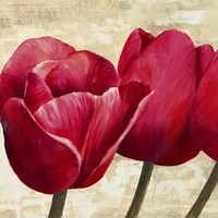 Red Tulips (Detail) Fine-Art Print
