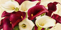 Calla Composition Fine-Art Print