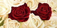 Rose Composition Fine-Art Print