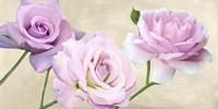 Rose Classiche Fine-Art Print