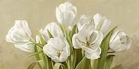 Tulipani Bianchi Fine-Art Print