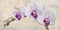 Royal Orchid Fine-Art Print