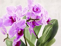 Orchidee Selvagge Fine-Art Print