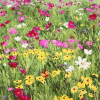 Country Flowers Fine-Art Print