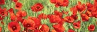 Poppy Field (Detail) Fine-Art Print