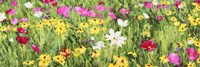 Field of Flowers (Detail) Fine-Art Print