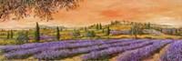Filari di Lavanda Fine-Art Print