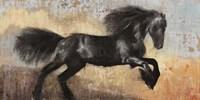Black Stallion Fine-Art Print