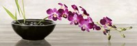 Orchid Arrangement Fine-Art Print