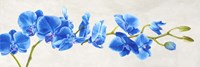 Blue Orchid Fine-Art Print