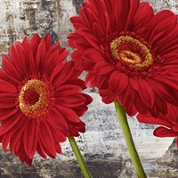 Red Gerberas I Framed Print