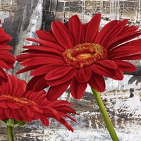 Red Gerberas II Fine-Art Print