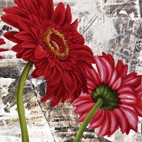 Red Gerberas III Framed Print