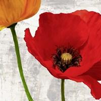 Summer Poppies I Framed Print
