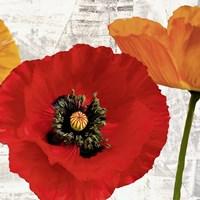 Summer Poppies III Framed Print