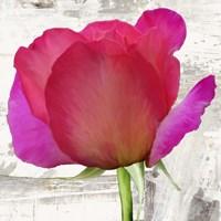 Spring Roses II Fine-Art Print