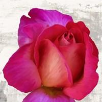 Spring Roses III Fine-Art Print
