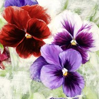 Pansies I Fine-Art Print
