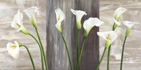 Country Callas Fine-Art Print