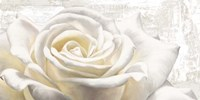 White on White Fine-Art Print