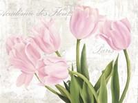 Academie des Fleurs Fine-Art Print